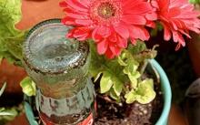 ไอเดีย DIY สุดเจ๋ง 'ขวดแก้วรดน้ำต้นไม้อัตโนมัติ'