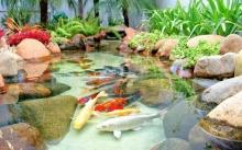 """10 ไอเดีย """"บ่อน้ำจำลองในสวน"""" สวยงามเหมือนยกมาจากป่า"""