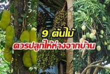 9 ต้นไม้ที่ควรปลูกให้ห่างจากตัวบ้าน
