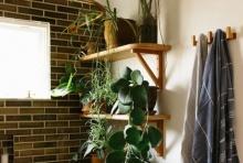 5 เคล็ดลับ 'จัดสวนในห้องน้ำ' เติมเต็มความสดชื่นจากธรรมชาติ