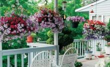 จัดสวนสวยแบบประหยัดพื้นที่ด้วยพรรณไม้ดอกกระถางแขวน