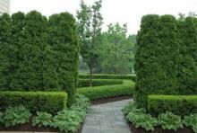 """10 """"ต้นไม้บังสายตา"""" สร้างพื้นที่ความเป็นส่วนตัวอย่างมีสไตล์"""