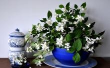 แนะนำ พืช 7 ชนิด ที่จะช่วยดึงพลังงานด้านบวกเข้าสู่บ้าน