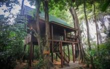 บ้านกระท่อมท้ายสวน ยกพื้นใต้ถุนสูง กลางป่าด้วยธรรมชาติสีเขียว